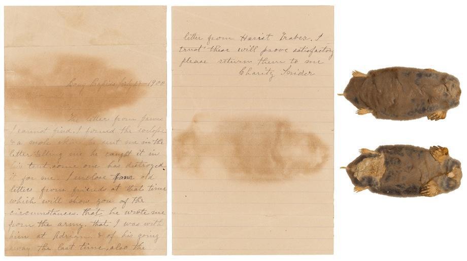 civil war widow's mole skin