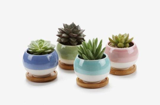 T4U Rachel's Choice 3-inch Ball-Shape Plant Pots With Bamboo Tray (Set of 4).