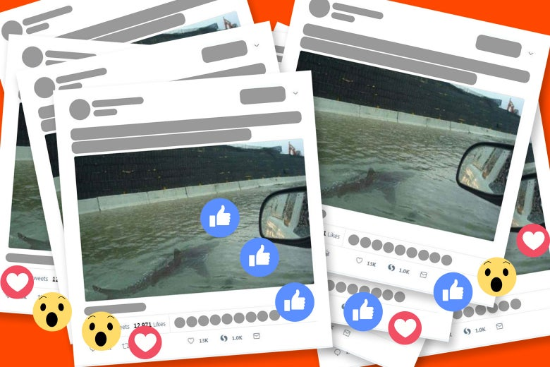 A photoshopped image of a shark swimming on a flooded Houston highway liked and shared over and over on social media.