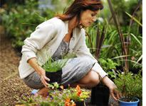 Fall gardening. Click image to expand.