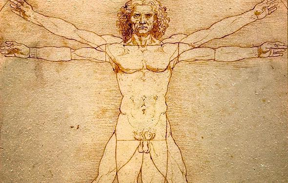 Vitruvian Man S Hernia Leonardo Da Vinci Drawing Shows