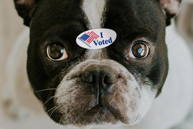 "Close-up of a dog's face staring directly at the camera, looking neutral to unhappy, with an ""I Voted"" sticker between its eyes."