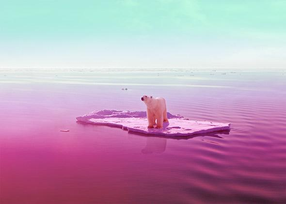 Polar bears are like Pinot Noir.