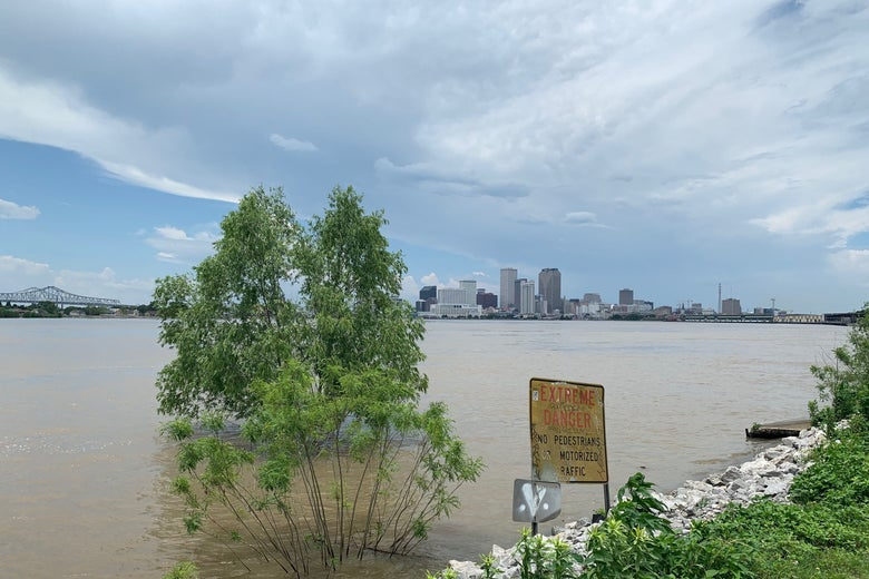 A tree submerged on the banks of the Mississippi River in New Orleans.
