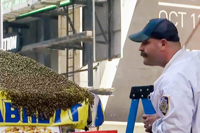 A police officer wearing a protective bee suit approaches bees on a hot dog vendor's umbrella in New York City.