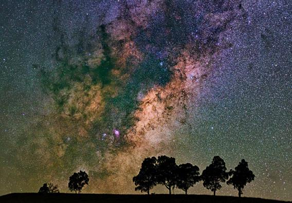 Milky Way behind trees