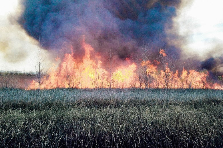 In a grassland, a few of trees on fire and bellowing smoke into the sky can be seen