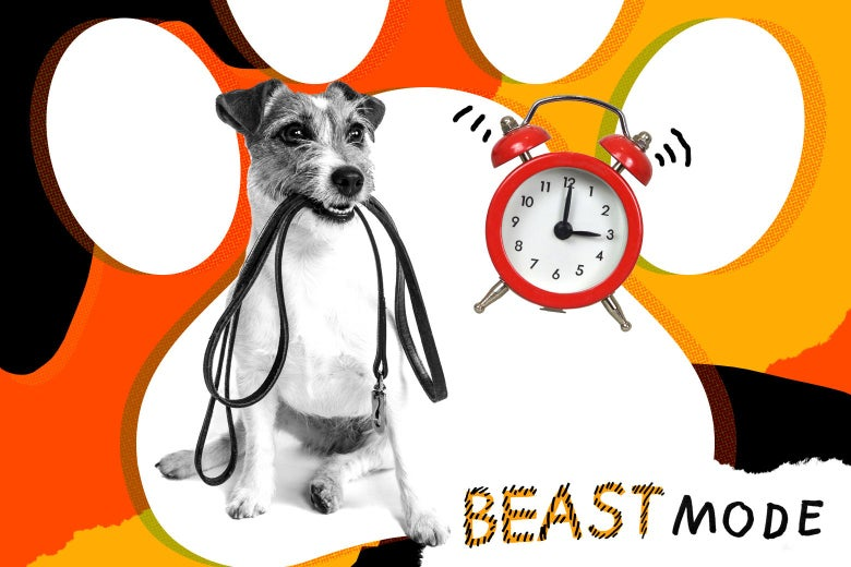 Photo illustration of a dog holding a leash in its mouth while an alarm clock rings
