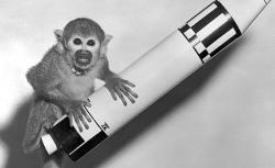 """Squirrel monkey """"Baker"""" rode a Jupiter IRBM into space and back in 1959."""