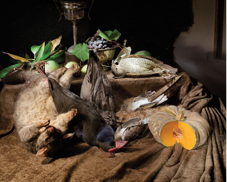 Marian Drew Still Life / Australiana (2003-2009) Possum and 5 birds.