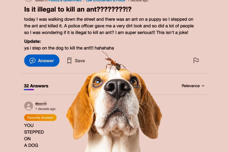 An ant is seen on a dog against a background of a Yahoo Answers Q&A about ants and dogs.