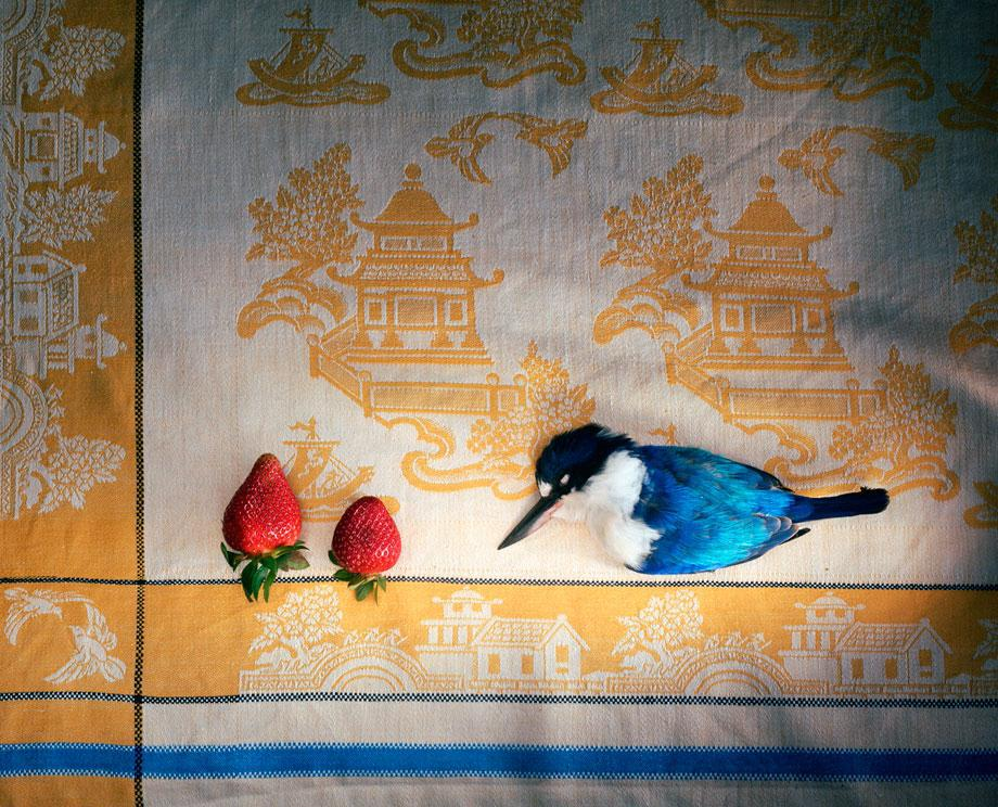 Marian Drew Still Life / Australiana (2003-2009) Kingfisher with Chinese cloth and strawberries.