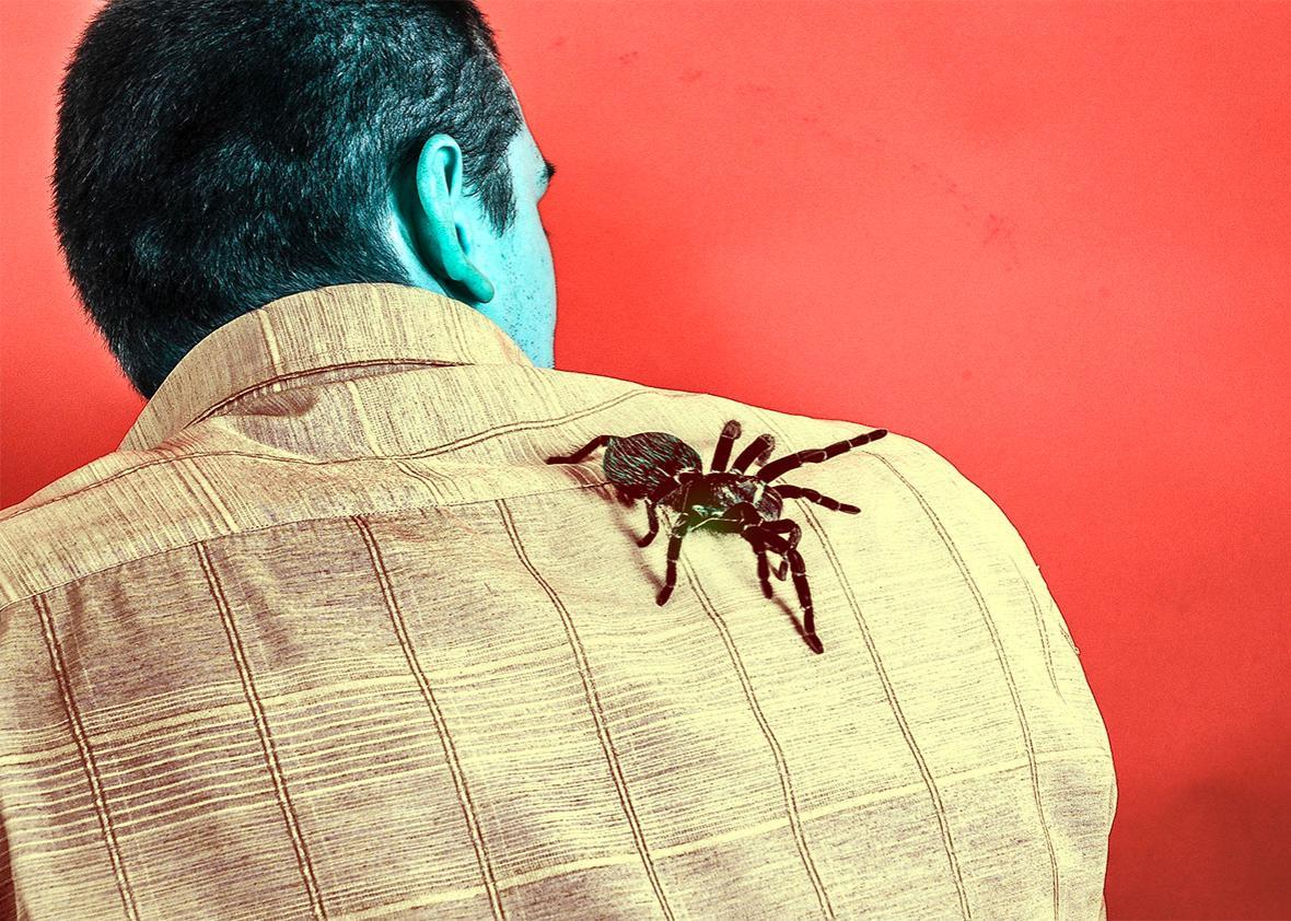 prosecutor afraid of spiders