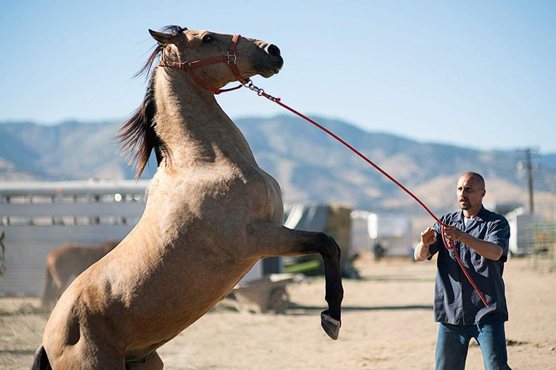 Matthias Schoenaerts wrangles the titular horse in this still from The Mustang.