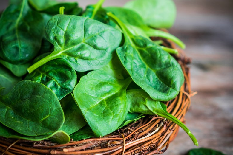 A basket of spinach leaves.