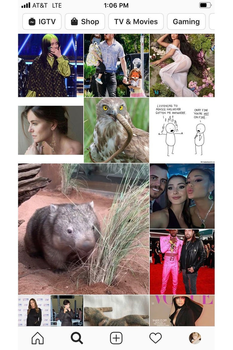 Screenshot of an Instagram Explore feed, featuring photos of celebrities and animals.