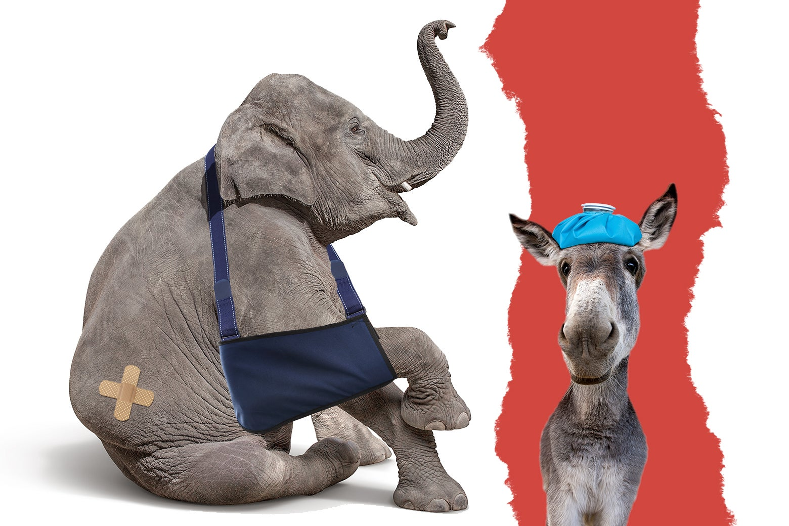 An elephant with its front leg in a sling and bandages on its bottom. A donkey with an ice pack on its head.