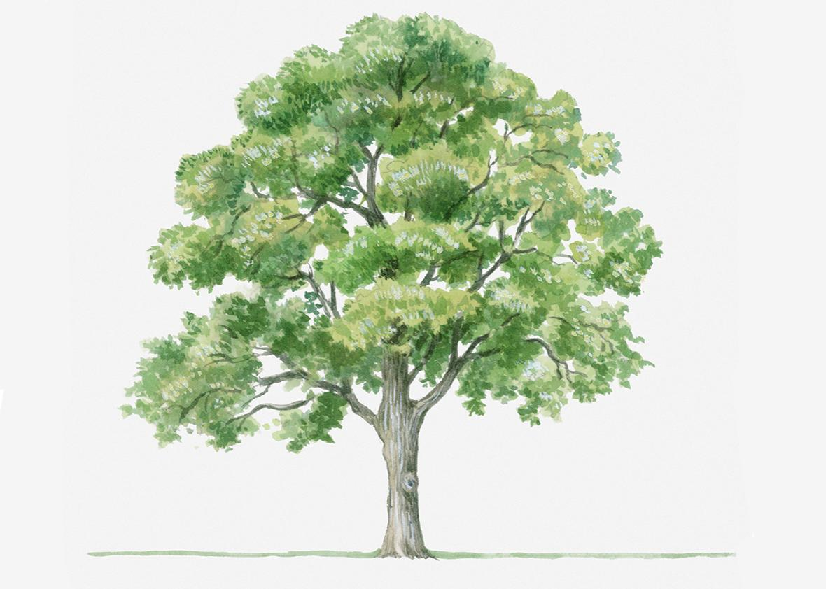 tree illustration.