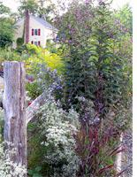 A habitat garden. Click image to expand.