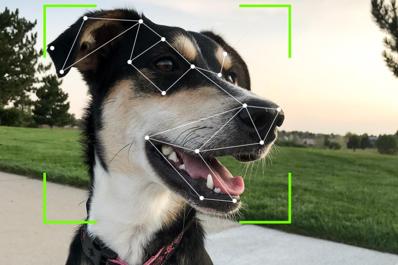 A dog's face mapped by facial recognition technology.