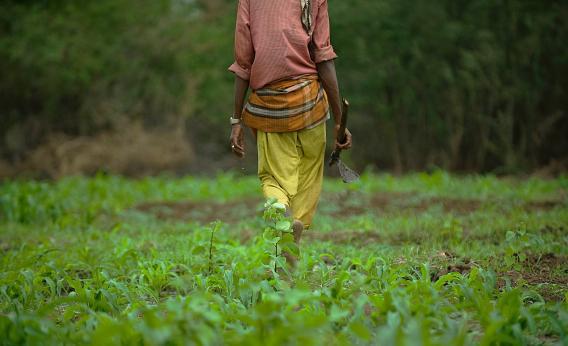 Somali farmer