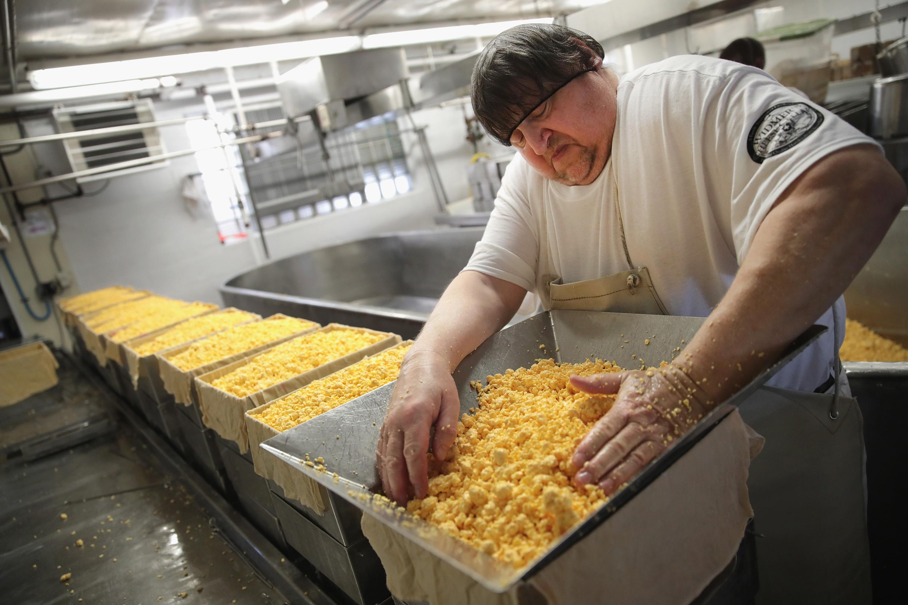 THERESA, WI - JUNE 27:  Lenny Zimmel puts Colby cheese curds into forms to make 40 pounds blocks of cheese at the Widmer's Cheese Cellars on June 27, 2016 in Theresa, Wisconsin. Widmer's is an artisanal cheesemaker that has produced cheese in the same facility for four generations much the same way as it was made by the founder, with traditional open vats and curds being stirred and scooped into molds by hand.  Record dairy production in the United States has produced a record surplus of cheese causing prices to drop. Despite this surplus Widmer's says it continues to see growth as consumers continue to gravitate toward craft-made food products.  (Photo by Scott Olson/Getty Images)
