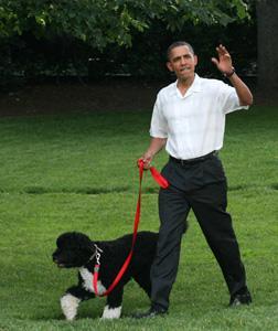 Barack Obama with the family dog, Bo. Click image to expand.