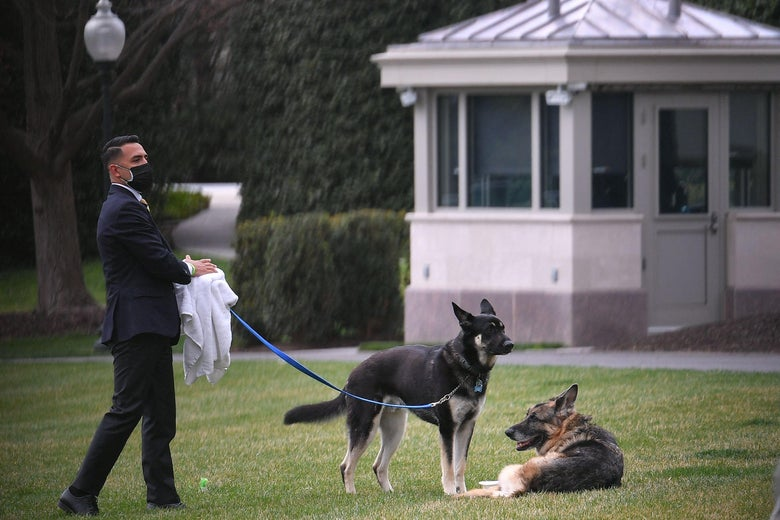The Bidens dogs Champ(R) and Major are seen with an aide on the South Lawn of the White House in Washington, D.C. on March 31, 2021.