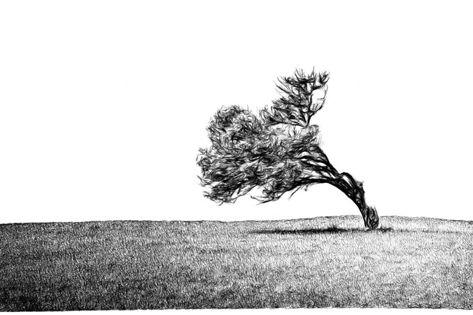 A tree blowing in the wind (India ink on paper (2012)).