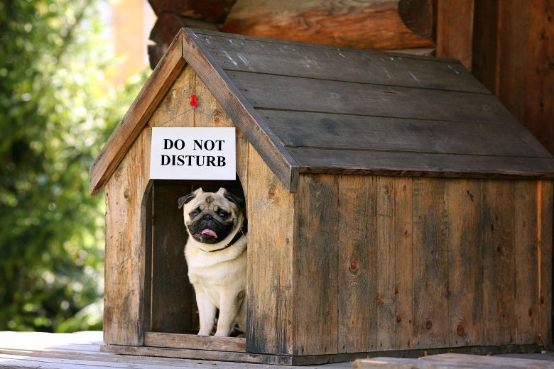 "A dog peeks out of a doghouse that has a ""Do Not Disturb"" sign hanging over it."