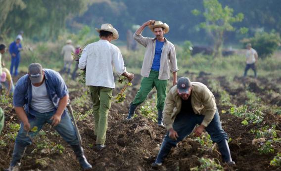 Cuban farmers.