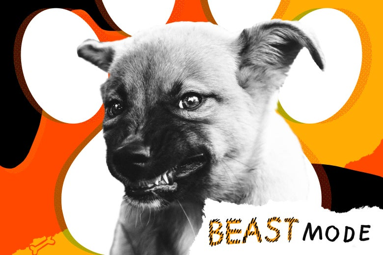 Incredible Dog Growls And Snarls When Awakened Pet Advice From Beast Mode Bralicious Painted Fabric Chair Ideas Braliciousco