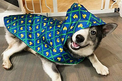 husky in a raincoat