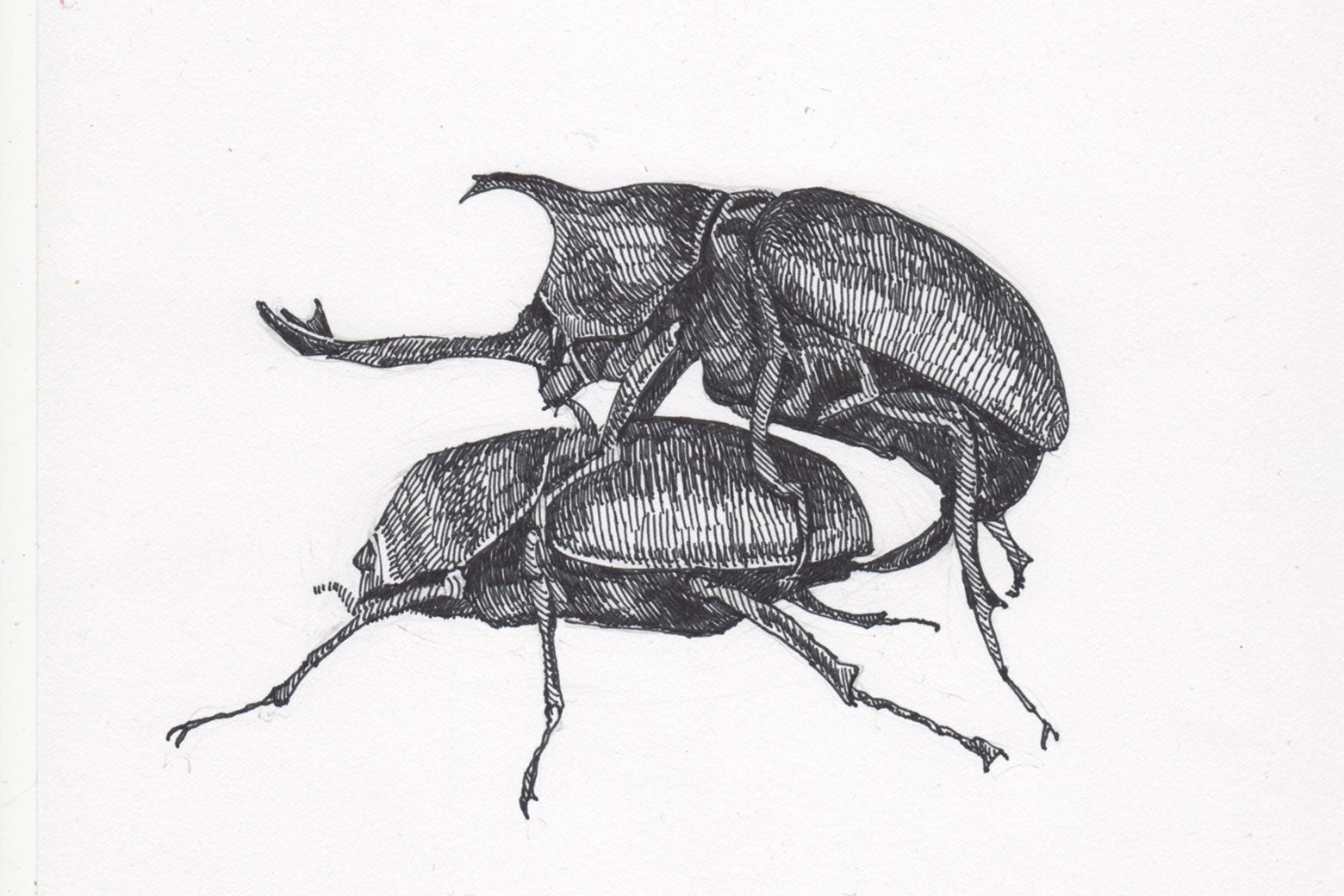 Rhino beetles doin' it.