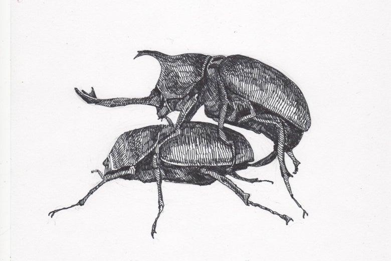 Rhino beetles doin' it.