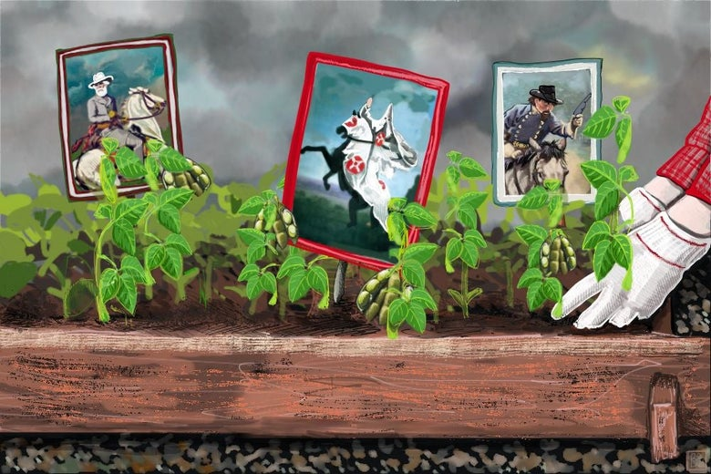 Soybeans growing with images of Confederate generals posted among them