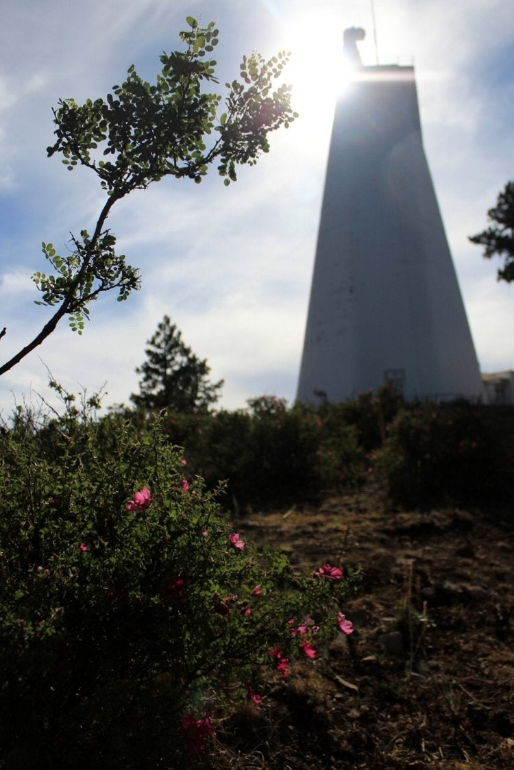A tree branch foregrounds an out-of-focus shot of the Richard B. Dunn Solar Telescope.