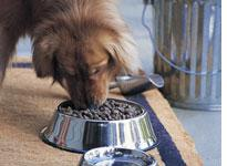 Dog food. Click image to expand.