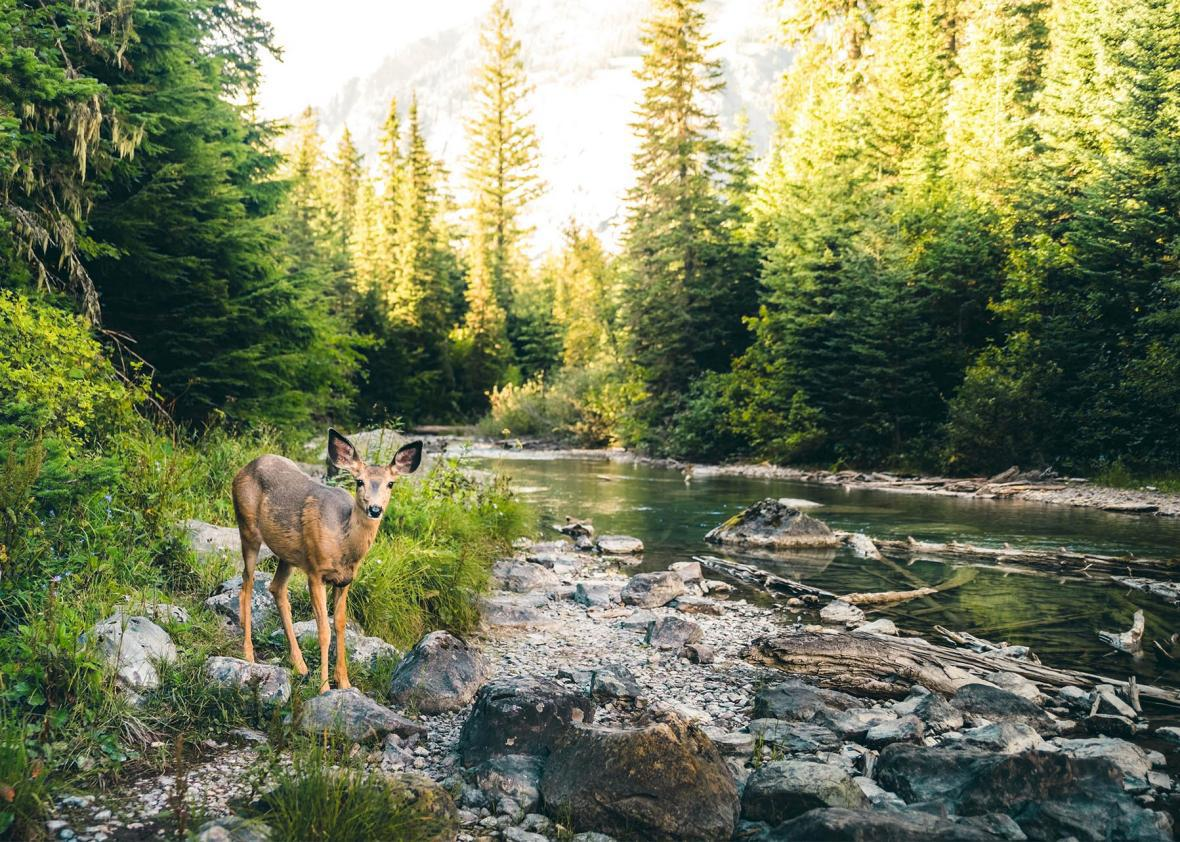 Habitat with a stream and a deer.