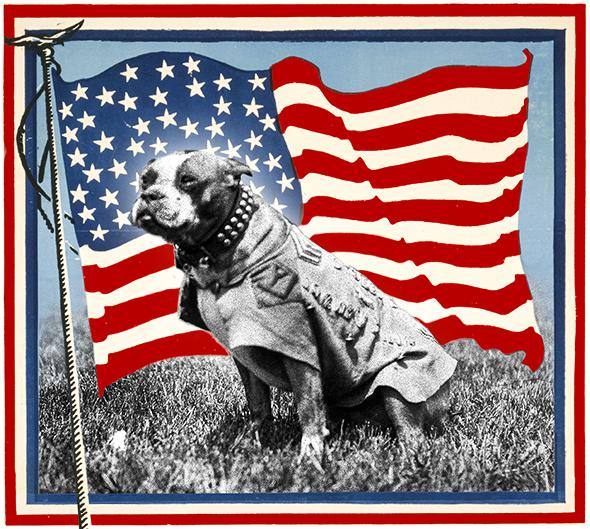 Dogs of war: Sergeant Stubby, the U.S. Army's original and still most highly decorated canine soldier.