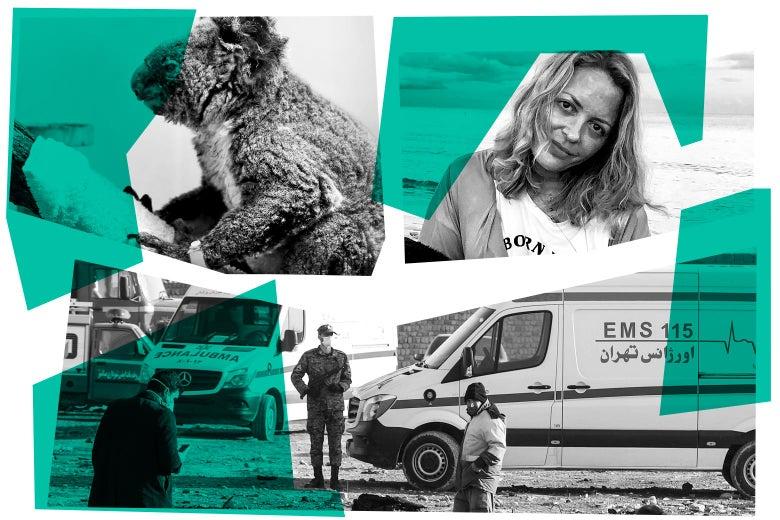 Photo collage showing a koala burned and bandaged, Elizabeth Wurtzel, and people next to ambulances.