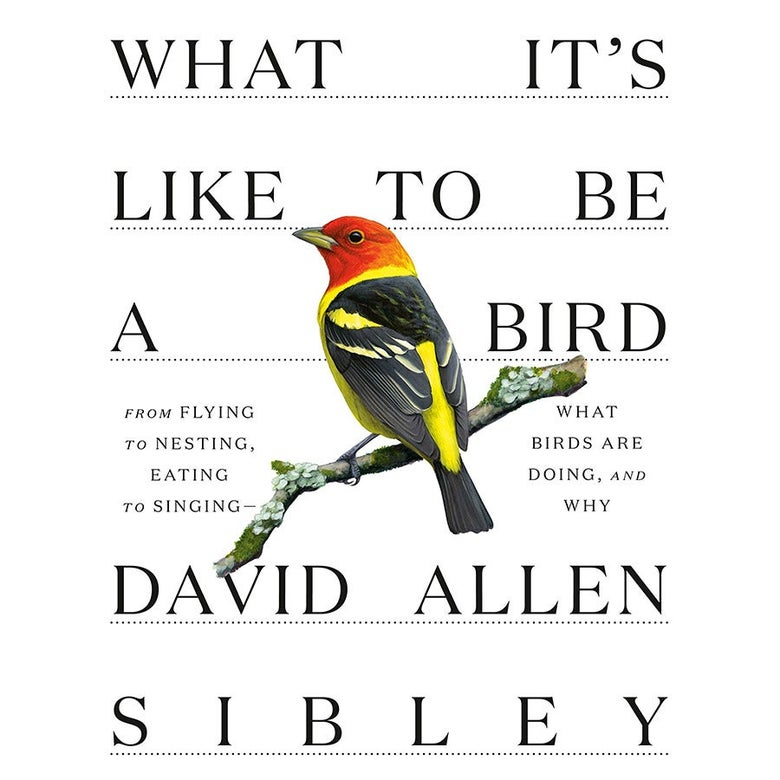 Cover of What It's Live to Be a Bird.
