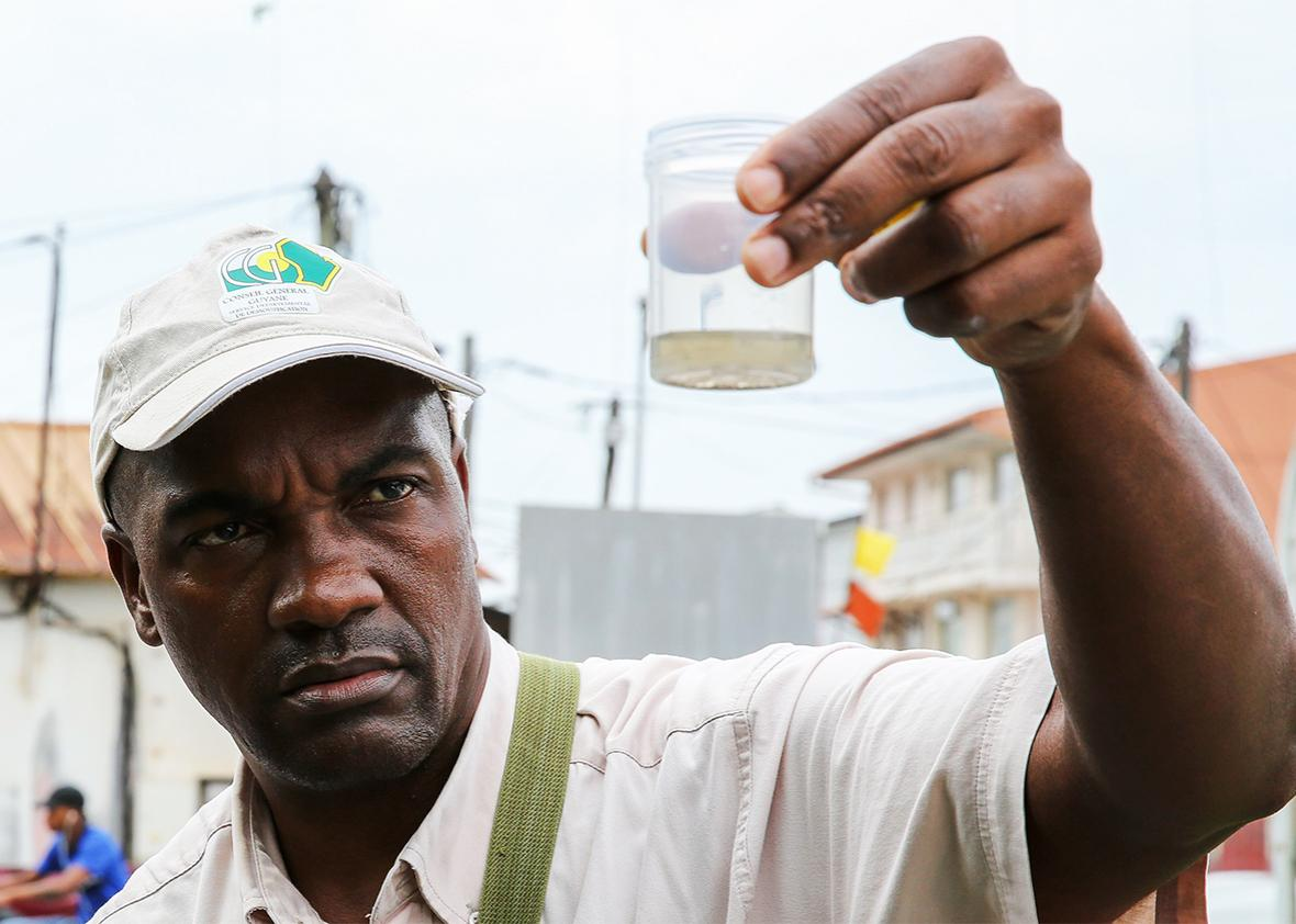 Collectivite Territoriale de Guyane collects mosquito larvae.