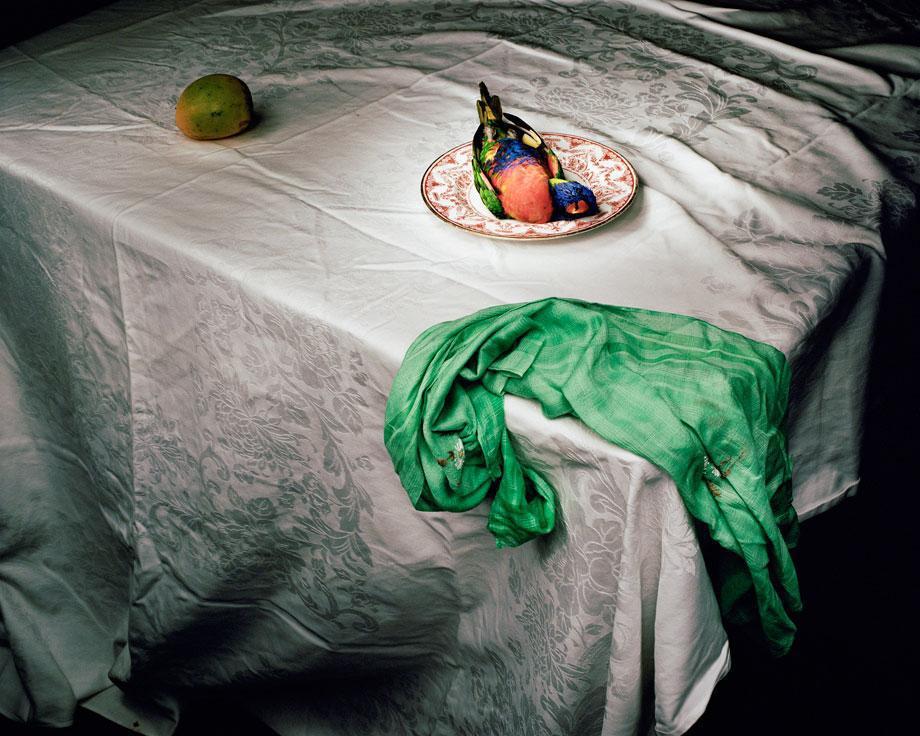 Marian Drew Still Life / Australiana (2003-2009) Lorikeet with green cloth.