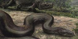 Titanoboa cerrejonensis. Click image to expand.