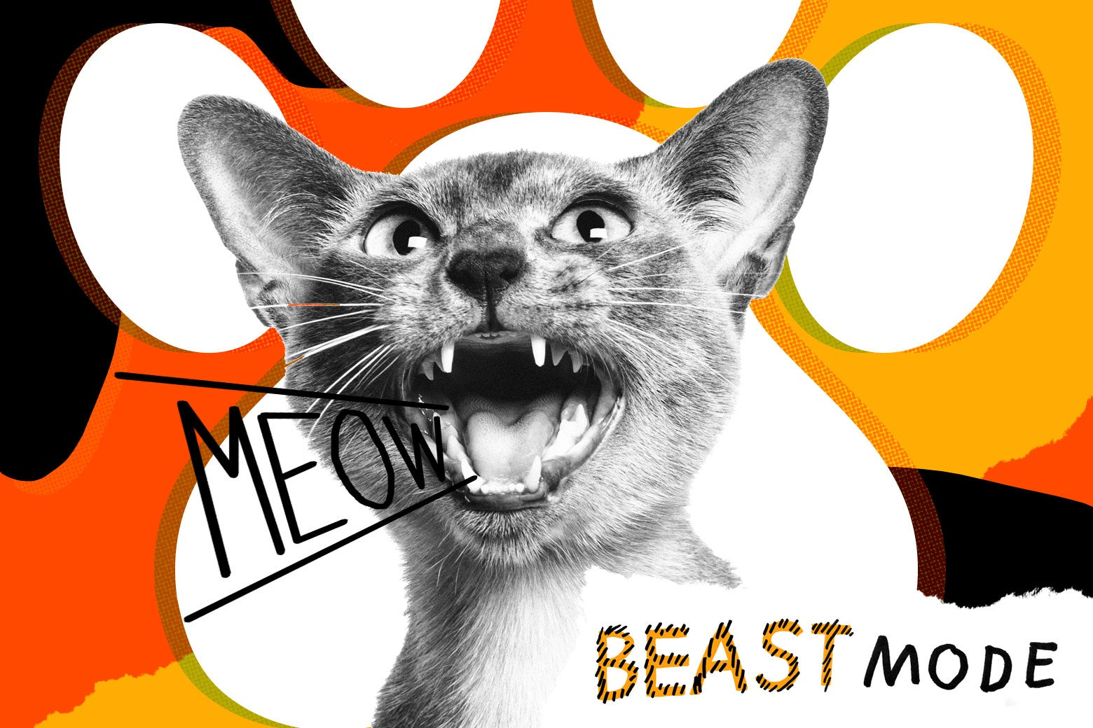 Photo illustration of a screaming cat