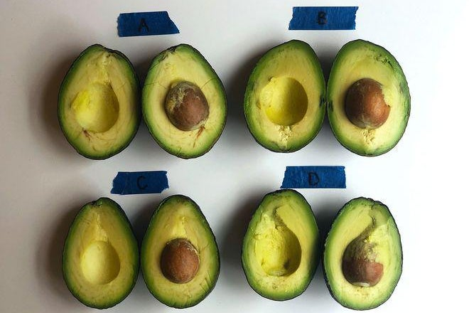 Four halved avocados labelled A, B, C, and D at various stages of ripeness on a table.