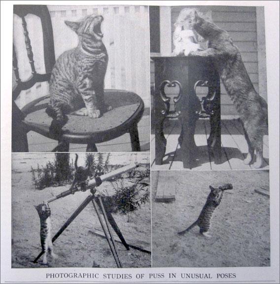 Photographic studies of cats.