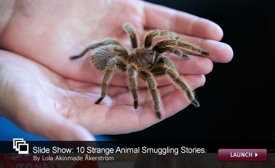 10 Strange Animal Smuggling Stories
