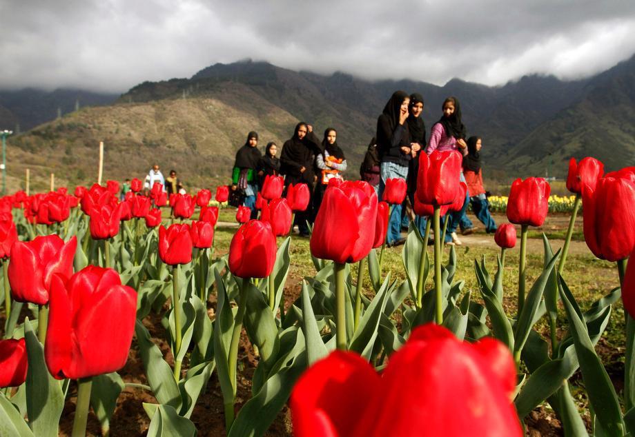Kashmiri school children walk at a tulip garden on the outskirts of Srinagar, India on April 3, 2013.